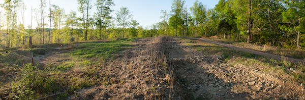 Food Forest: Hawthorn hedgerow with infiltration basins and nitrogen fixing ground cover